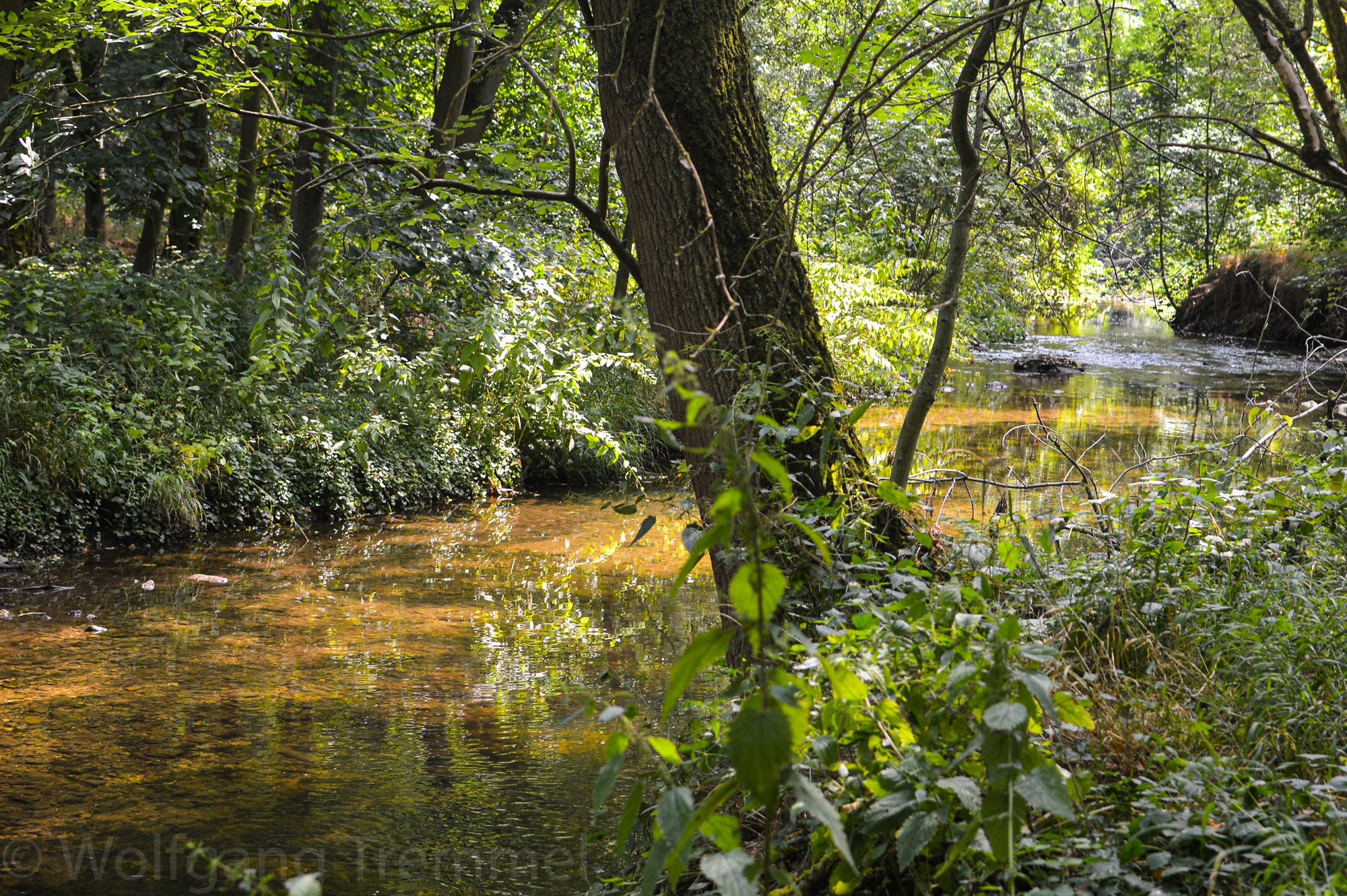 Lieblingsplatz: Wald bei Ober-Erlenbach